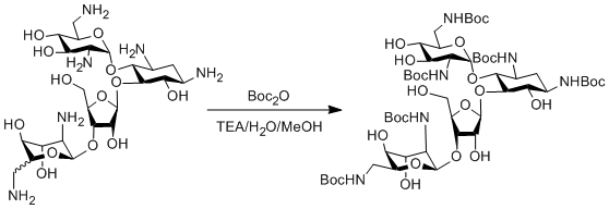"Reaction Scheme: <IMG src=""/images/empty.gif""><IMG src=""/images/empty.gif""><IMG src=""/images/empty.gif""><IMG src=""/images/empty.gif""><IMG src=""/images/empty.gif"">Boc Protection of Aminoglycosides<IMG src=""/images/empty.gif""><IMG src=""/images/empty.gif""><IMG src=""/images/empty.gif""><IMG src=""/images/empty.gif""><IMG src=""/images/empty.gif"">"